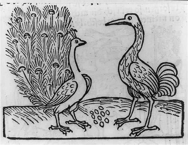 [Fable of crane and peacock]