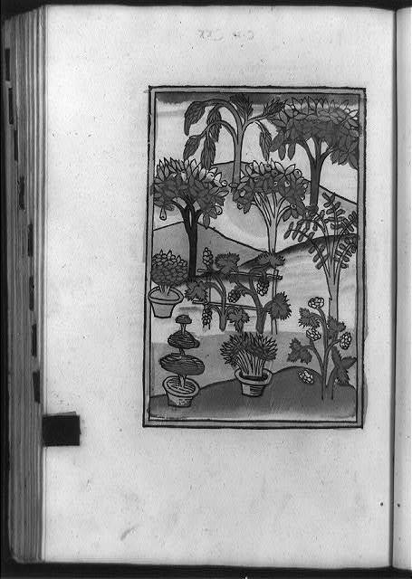 [Trees with medicinal virtues, growing naturally and cultivated in pots]