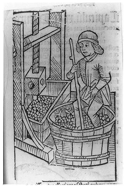 [Viticultural scenes - man crushing grapes in vat with his feet]