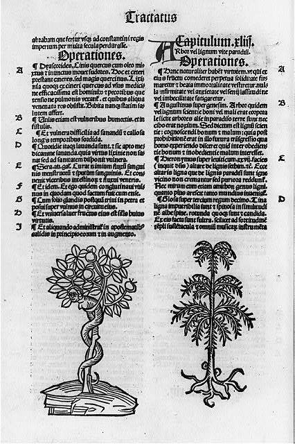 [2 botanical illus. and page of text]
