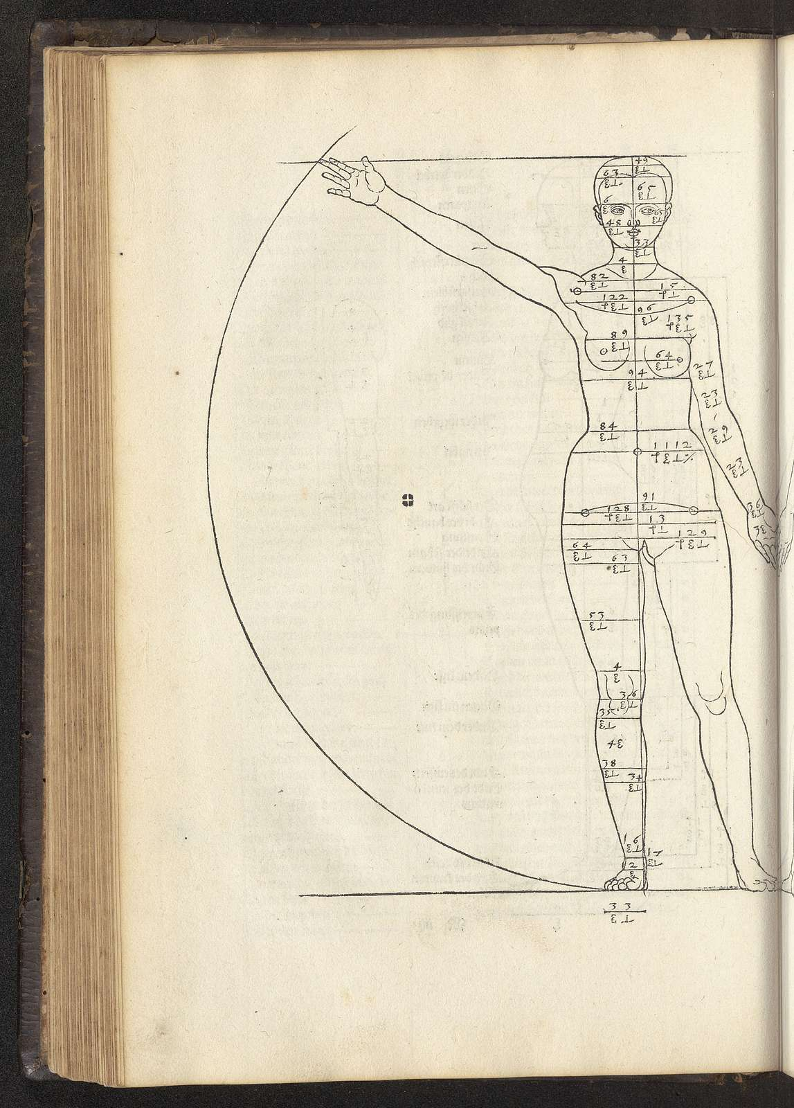 Hierinn sind begriffen vier Bücher von menschlicher Proportion