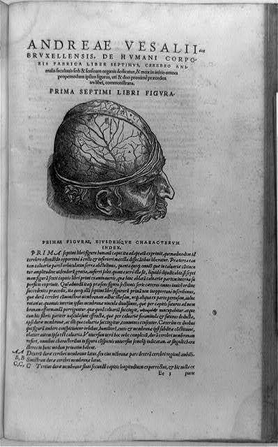 [Man's head, showing anatomy of brain; and surrounding text]