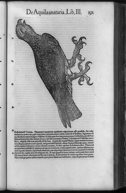 [Eagle with prominent claws; and surrounding text]