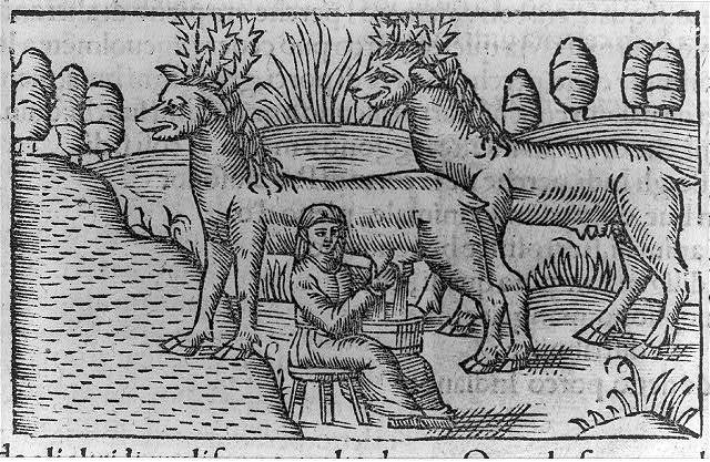 [Illustration of activities of Lapps and Finns: woman milking reindeer]