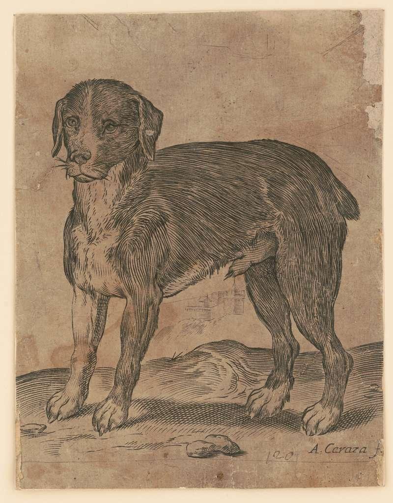 Dog A. Caraza