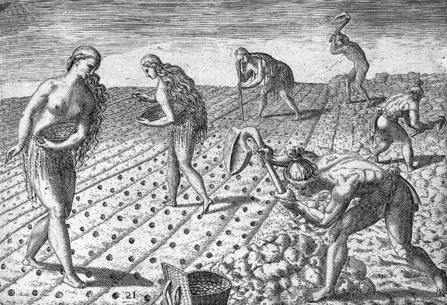 [Florida Indians planting seeds of beans or maize]