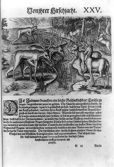 [Florida Indians, disguised under deerskins, hunting deer]