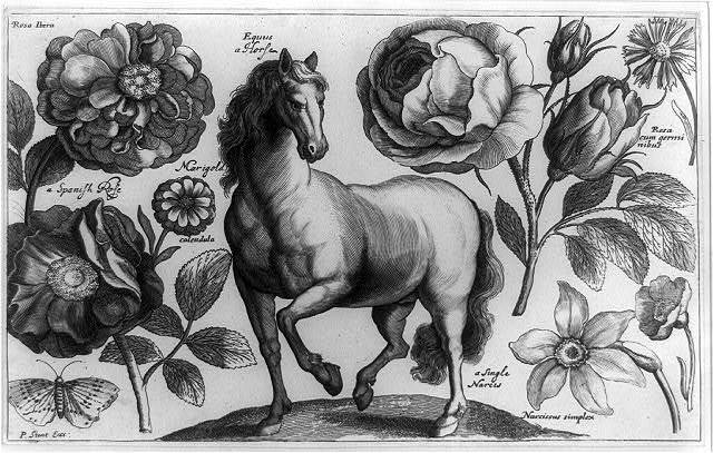 [Horse, rose, narcissus, etc.]