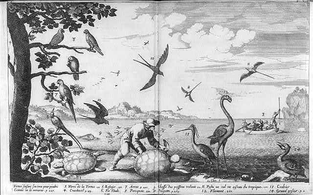 [Birds and turtles of the French West Indies; men spear-fishing from rowboat]