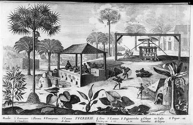 [West Indies: manufacture of sugar]