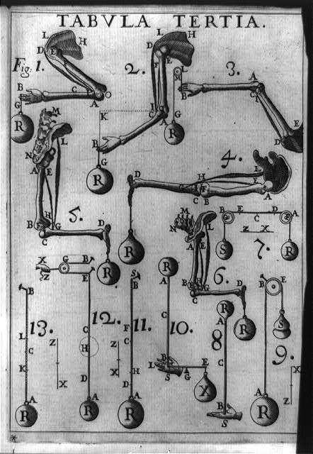 [Movement of human appendages and pulley systems compared using principles of mechanics and statics]