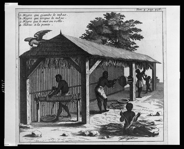 [Four people working with harvested tobacco in shed]