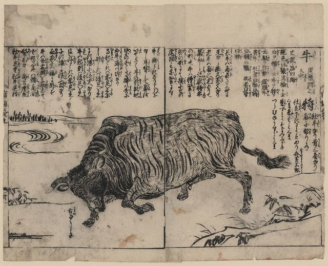[A large bull or ox]