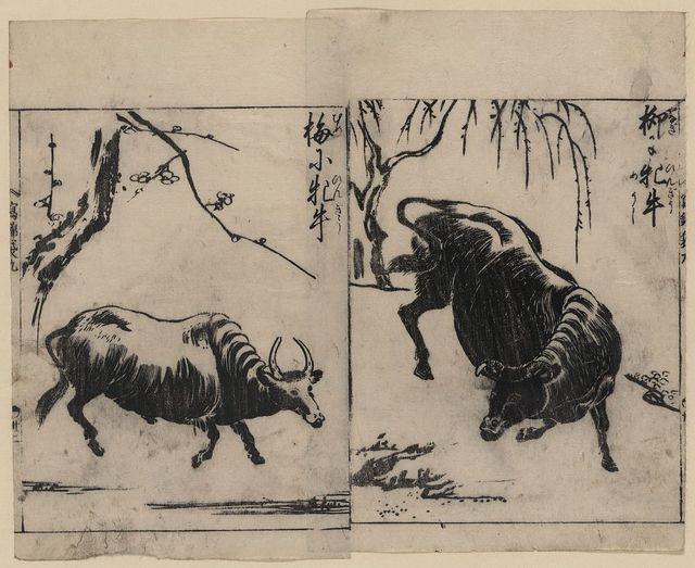 [Two oxen, one under a willow tree and one under a plum tree]