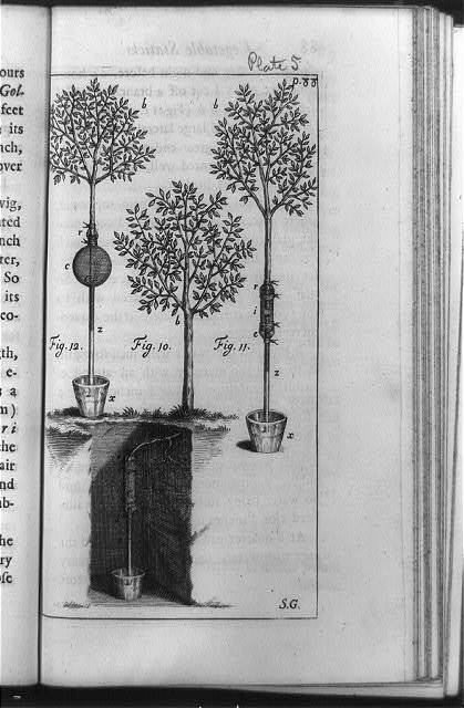 [Three trees undergoing plant physiology experiments, including demonstration that suction of roots can overcome the force of gravity] / S.G.