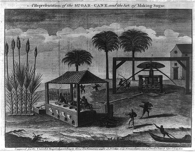 A representation of the sugar-cane and the art of making sugar
