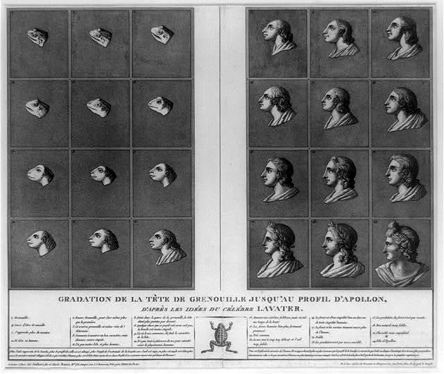 Gradation de la tête de grenouille jusqu'au profil d'Apollon, d'après les idées du célébre Lavater