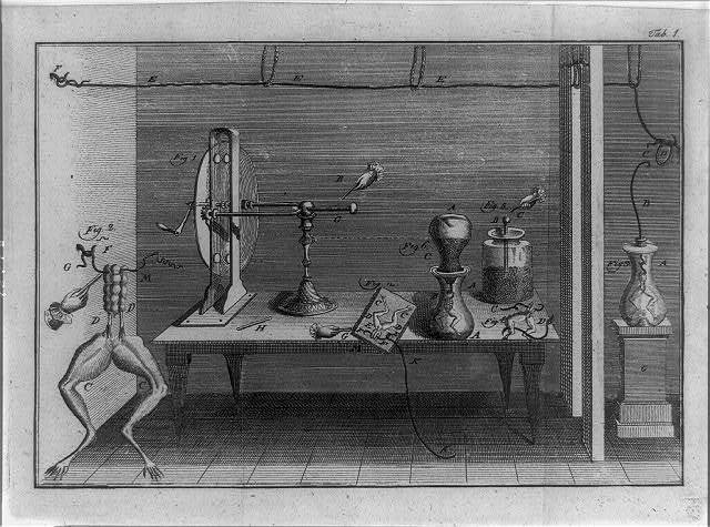 [Legs of dissected frogs, and various metallic apparatus used to measure what was thought to be electricity flowing in animals]