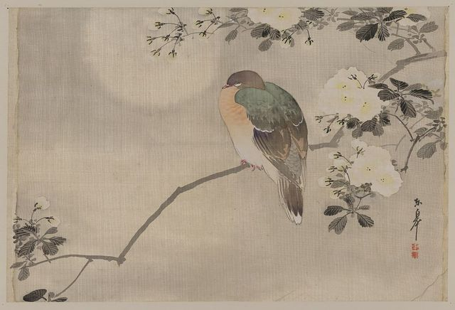 [Bird perched on a branch of a blossoming tree]