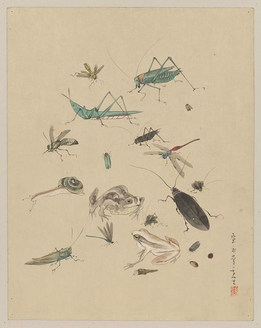 [Frogs, snails, and insects, including grasshoppers, beetles, wasps, and dragonflies]