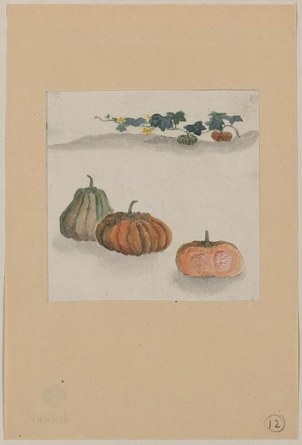 [Kabocha squash with plant growing in the background]