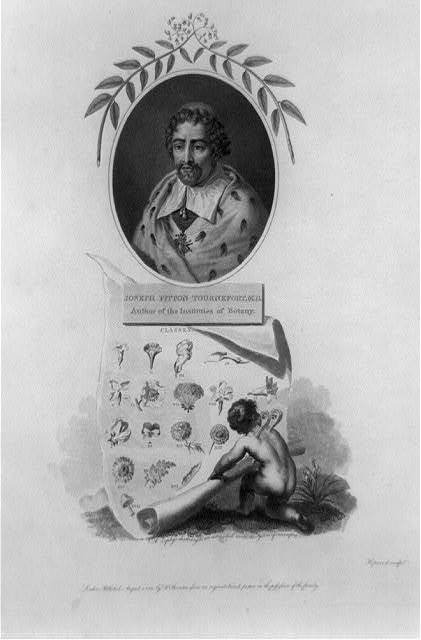 [Portrait of Joseph Pitton de Tournefort, M.D. above scroll of his classes of plants] / Hopwood, sculpt.