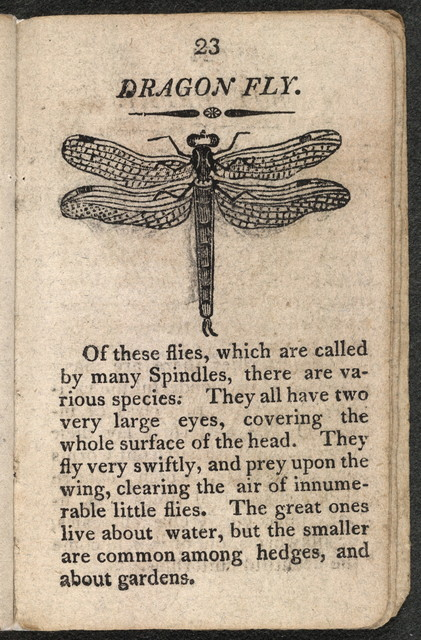 The History of insects.