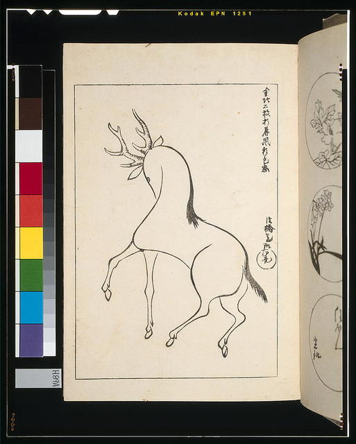 [Stag looking for its mate]