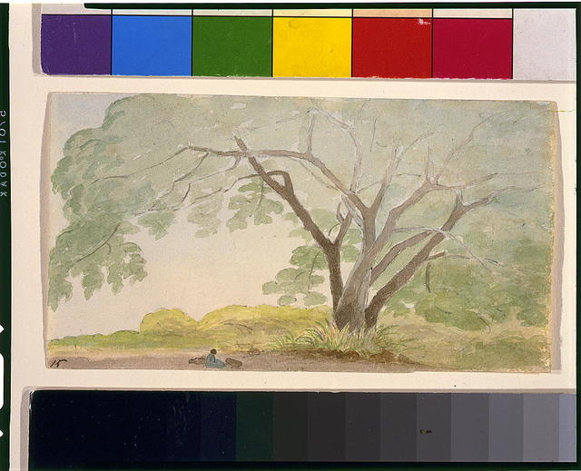 Wild cassia near Bridge Tavn(?), west of Sp[anish] T[own]--February 8, 1815