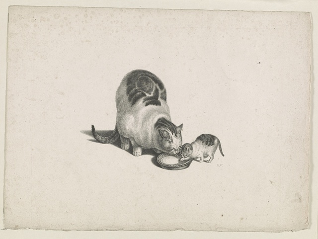 [Domestic cat and kitten drinking milk from a saucer] / CF.