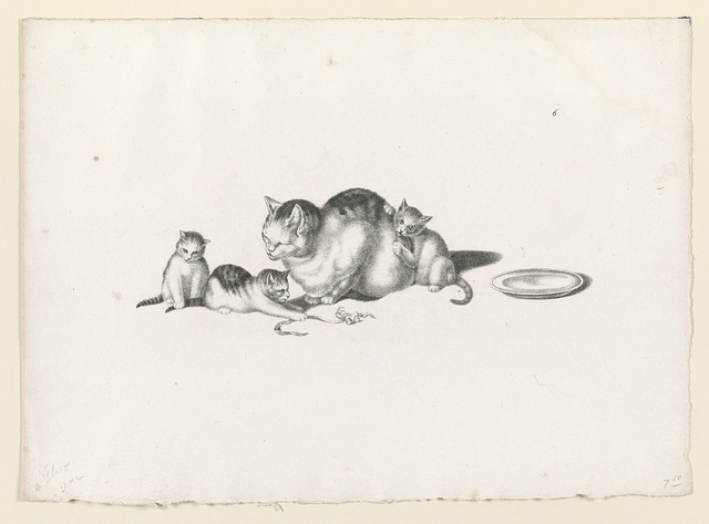 [Domestic cat napping with three playful kittens and a saucer on the right]
