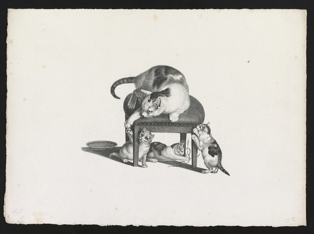 [Domestic cat on a stool playing with three kittens]