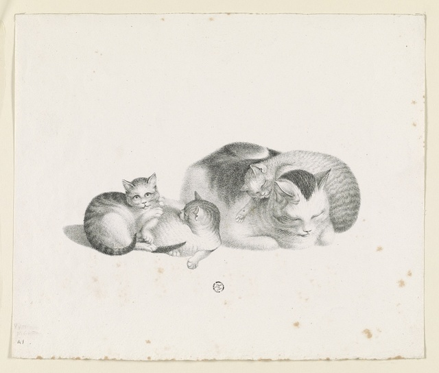 [Domestic cat sleeping with three kittens resting]