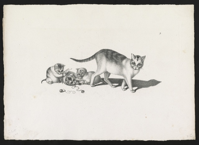 [Domestic cat with three kittens, playing]