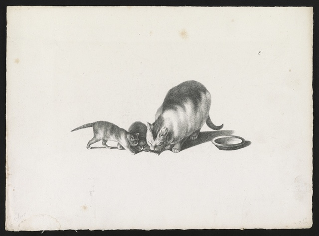 [Domestic cat with two kittens inspecting something on the ground, a saucer is on the right]