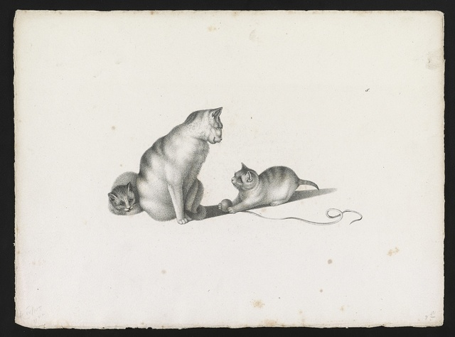 [Domestic cat with two kittens, one playing with a ball of string]