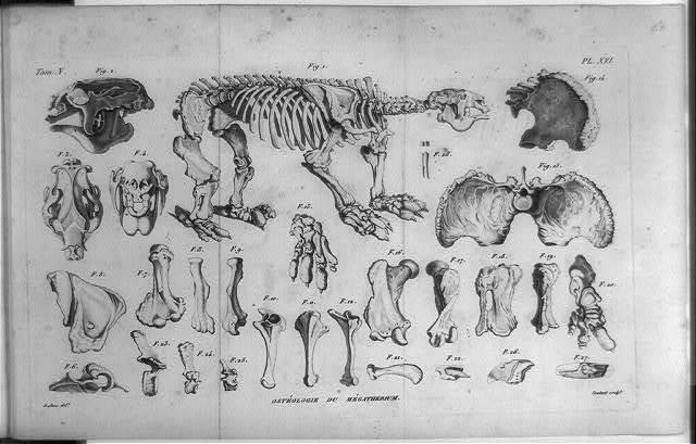 Osteologie du megatherium / Dalton, del. ; Coutant, sculpt.