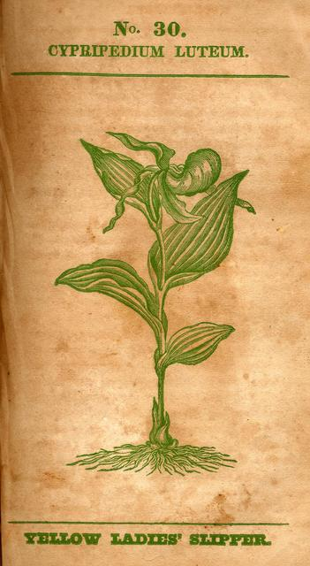Medical flora, or, Manual of the medical botany of the United  States of North America. Containing a selection of above 100 figures and descriptions of medical plants, with their names, qualities, properties, history, &c.: and notes or remarks on nearly 500 equivalent substitutes, volume 1