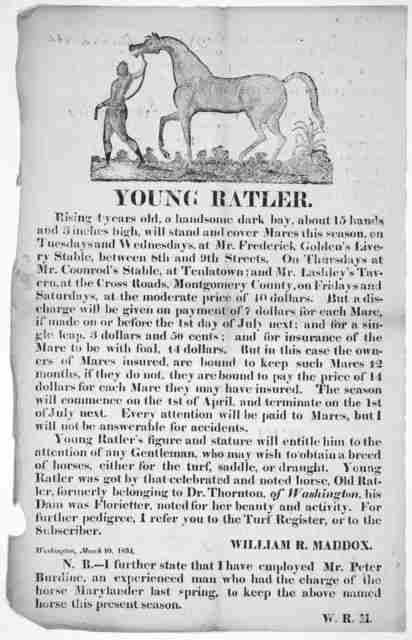 Young Ratler. rising 4 years old, a handsome dark bay, about 15 hands and 3 inches high, will stand and cover mares this season, ... William R. Maddox. Washington, March 10, 1834.