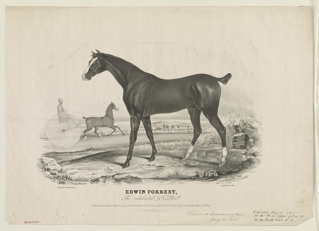 Edwin Forrest, the celebrated trotter