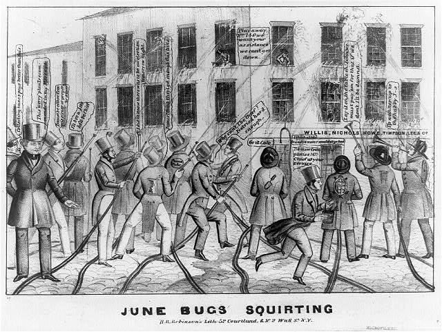June bugs squirting
