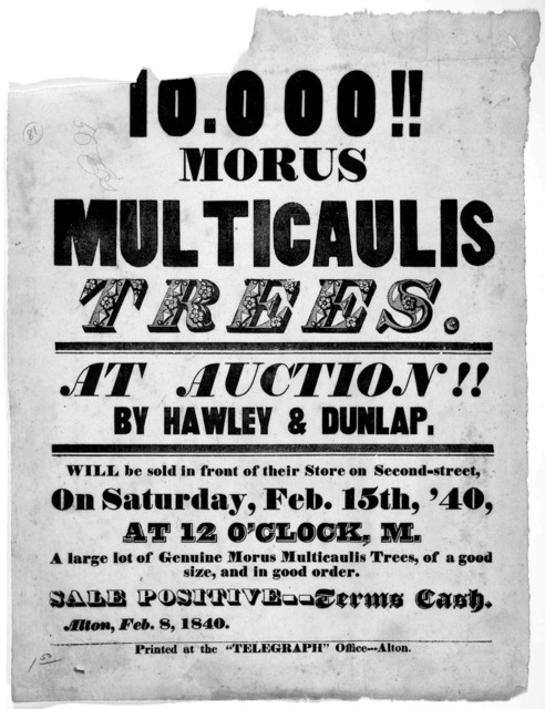 10.000!! Morus multicaulis trees at auction!! by Hawley & Dunlap. Will be sold in front of their store on Second-street, on Saturday, Feb. 15th, '40, at 12 o'clock M. A large lot of genuine Morus multicaulis trees, of a good size and in good ord