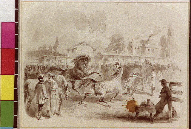 [Horses at auction or races?]