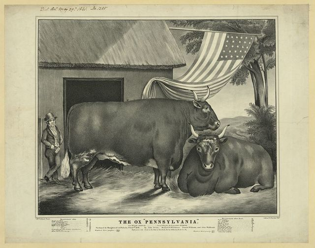 "The ox ""Pennsylvania"" / T. McClelland pinxt. ; lith. of T. Sinclair, Phila."
