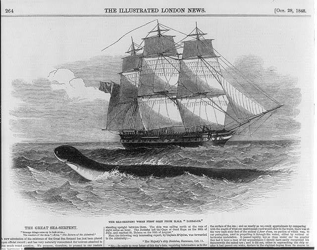 The great sea serpent. The sea serpent when first seen from H[er] M[ajesty's] S[hip] DAEDALUS