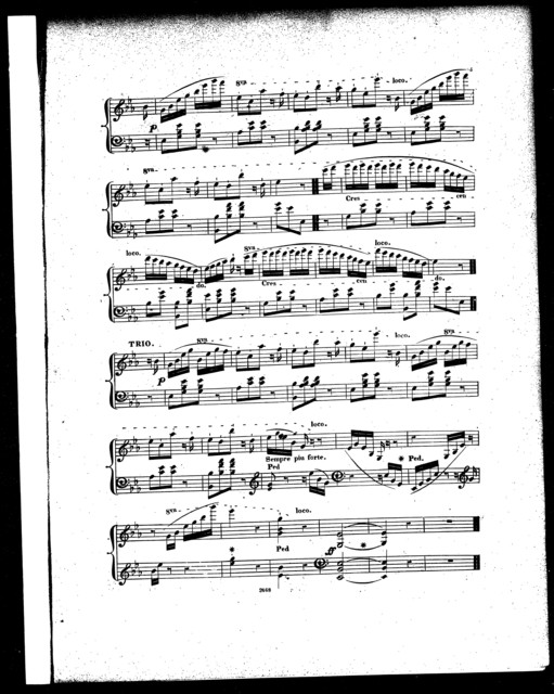 Geranium polka