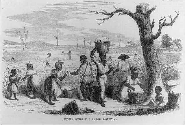 Picking cotton on a Georgia plantation
