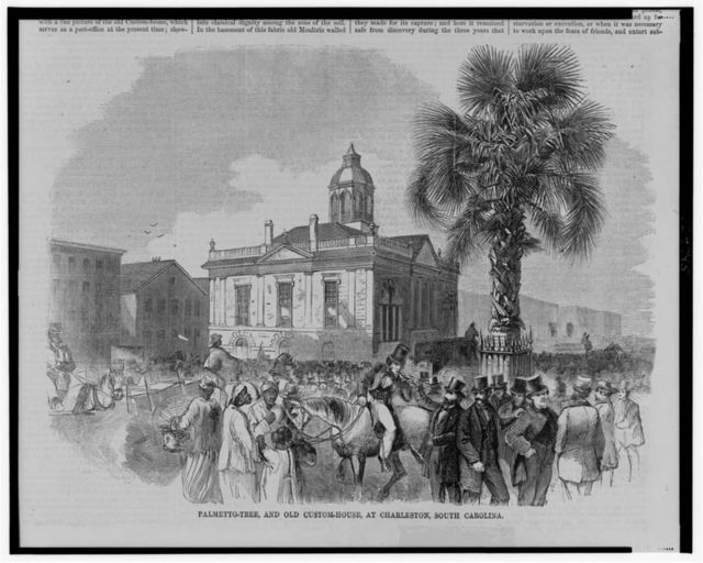 Palmetto-tree, and old custom-house, at Charleston, South Carolina