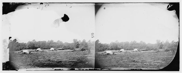 Cedar Mountain, Virginia. Bodies of horses on battlefield