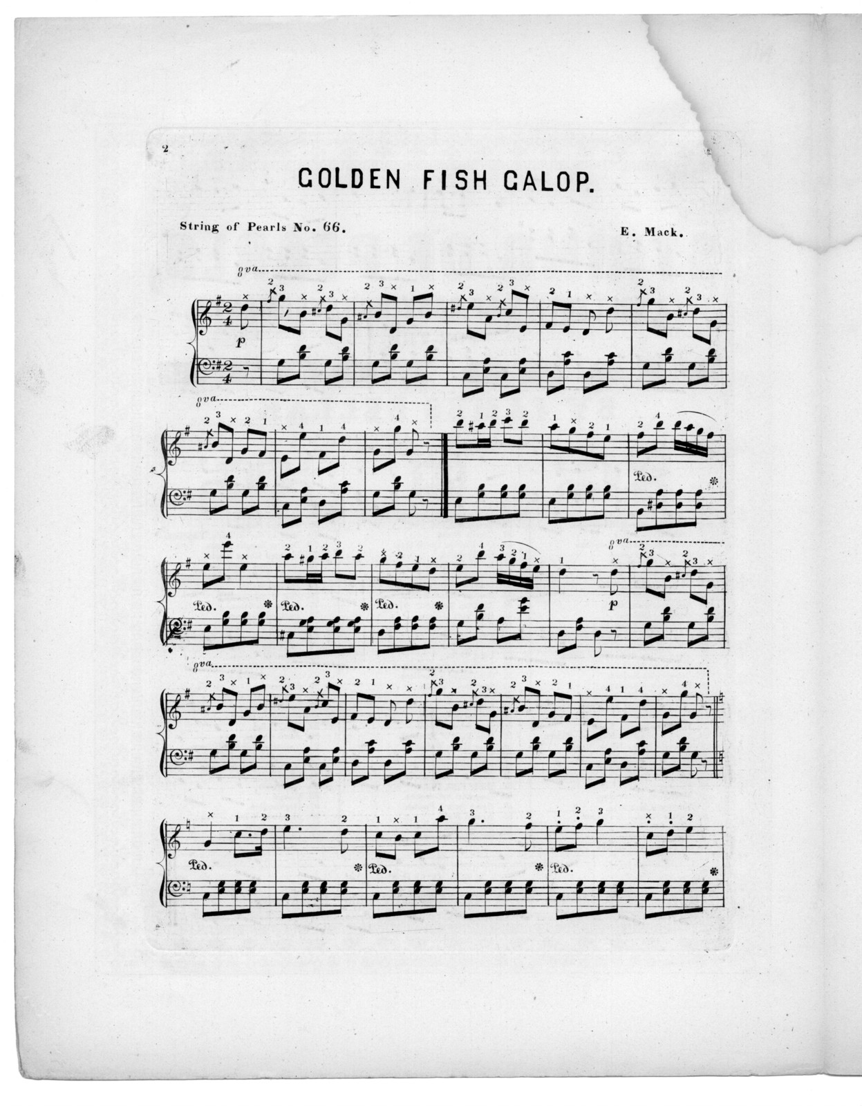 Golden fish galop